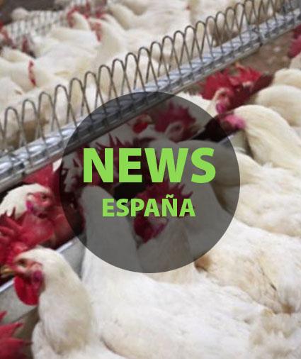 News Espanha2