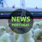 Avicultura e suinicultura em Portugal